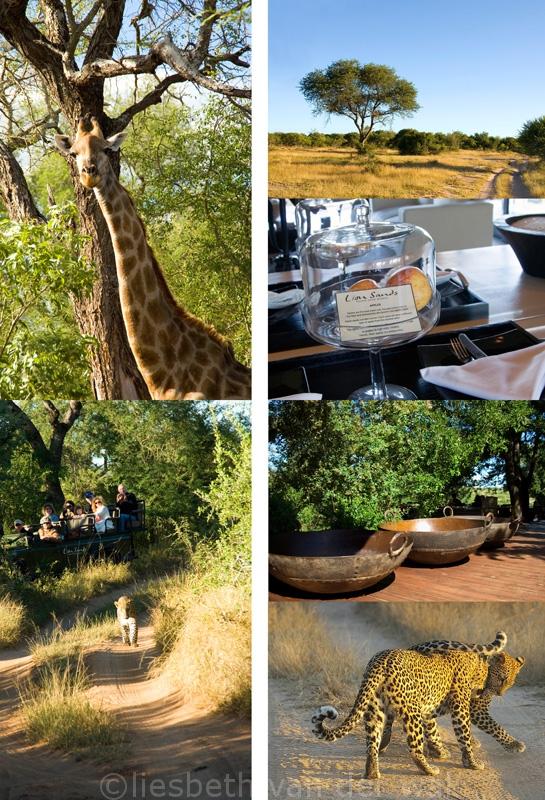 Lion Sands, safari, zuid afrika, reizen, reis naar Zuid Afrika, hotel boeken, stockfoto's zuid-afrika, fotografie en tekst ©santmedia